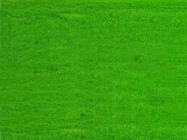 Grass Grass  Frame Backgrounds