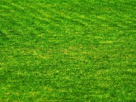 Grass HD Photo Backgrounds