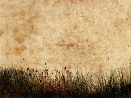 Grass Textured Download Backgrounds