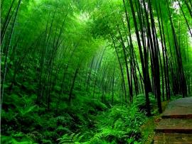 Green Bamboo Forest Download Backgrounds