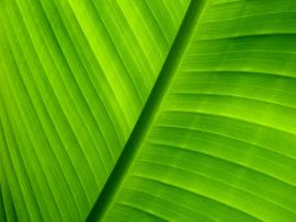 Green Download Backgrounds