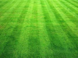 Green Grass Texture Photo Green Grass Texture image Backgrounds