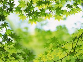 Green Images Green Leaves Hd Photo Backgrounds