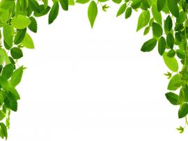 Green Leaf Border Art Backgrounds