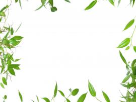 Green Leaves Border Frame Backgrounds