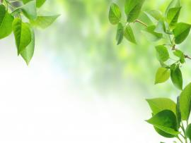 Green Leaves Design Backgrounds