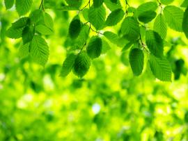 Green Leaves image Backgrounds