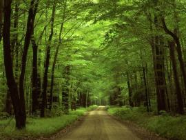 Green Woods  Clipart Backgrounds