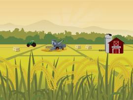 Harvest Time Backgrounds