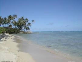 Hawaii Beach A Beautiful Beach In Hawaii Keywords Beach Ocean Tree   image Backgrounds