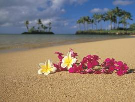 Hawaii Photo Clip Art Backgrounds