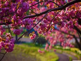 Hd Desktops Of Spring Hd Images 3 HDs   Backgrounds
