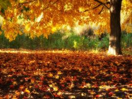 HD Fall Scenerys Graphic Backgrounds