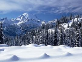 Hd Snow Forest Hd Snow Hd Snow Design Backgrounds