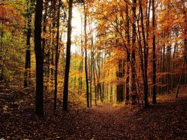 Hd Woods Desktop Download Backgrounds