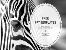 Image Of A The Face Of A Zebra Close Up PowerPoint Templates (1 Art Backgrounds
