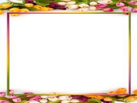 Invitation Frame Backgrounds