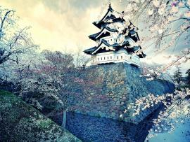 Japanese White Nature Hd Design Backgrounds