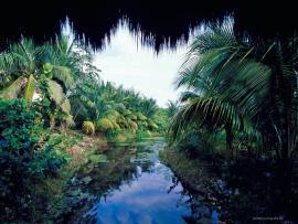 Jungle For Pinterest Backgrounds