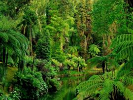 Jungles HD Pictures  Live HD HQ Pictures Images   Design Backgrounds