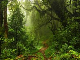 Jungles HD Pictures  Live HD HQ Pictures Images   Frame Backgrounds