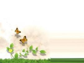 Jungles Templates and Jungle Animals Butterfly Frame Backgrounds