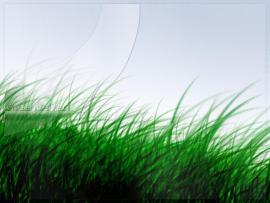 Kelsey Chen Grass Wallpaper Backgrounds