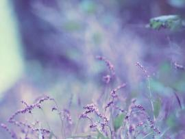 Lavender Crystal Backgrounds