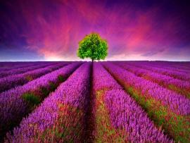 Lavender Hd Backgrounds