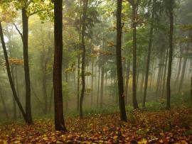 Light Foggy Woods Clip Art Backgrounds