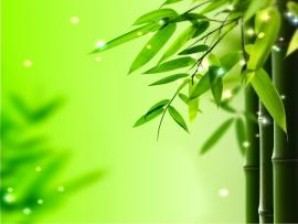 Light Green Bamboo Leaves Photo Backgrounds