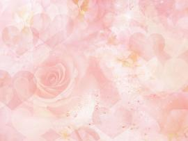 Light Pink Rose Clipart Backgrounds