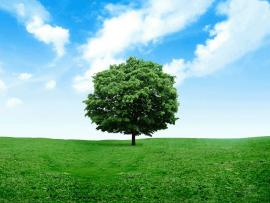 Lonely Tree Photography Presentation Backgrounds