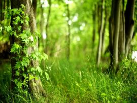 Modest Woods Art Backgrounds