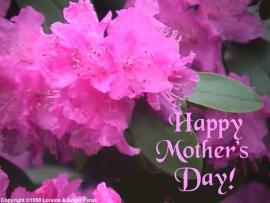 Mothers Day Flowers Design Backgrounds