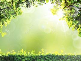 Natural Green Spring or Summer Season Abstract Nature Backgrounds