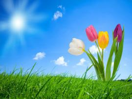 Nice Spring Design Backgrounds