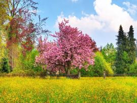 Nice Spring Frame Backgrounds