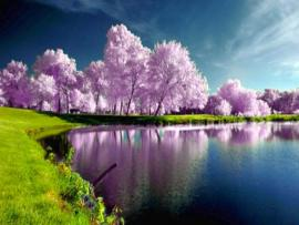 Nice Spring Backgrounds