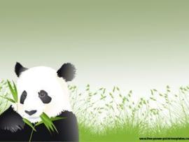 Panda Animal Presentations   image Backgrounds