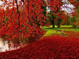 Park Autumns Pictures Photos Images Backgrounds
