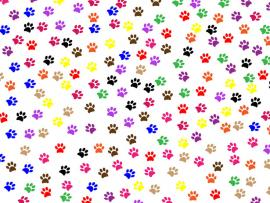 Paw Prints Free Stock Photo  Public Domain Pictures Design Backgrounds