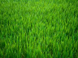Pics Photos  Green Grass image Backgrounds