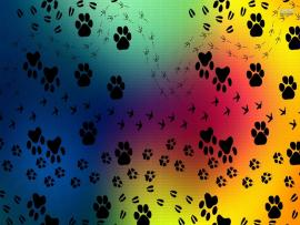 Pics Photos  Paw Print Paw Prints Pattern Picture Backgrounds