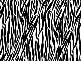 Pics Photos  Zebra Print Frame Backgrounds