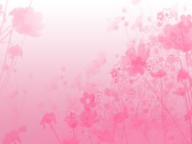 Pink Quality Backgrounds