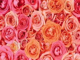 Pink Rose Basket Clip Art Backgrounds