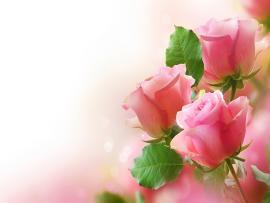 Pink Rose Clip Art Backgrounds