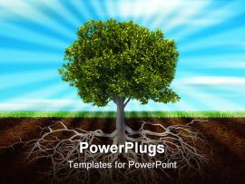 Powerpoint Trees Template About The Wallpaper Backgrounds