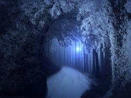Premade Spooky Forrest Slides Backgrounds